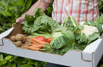 水果、蔬菜包装